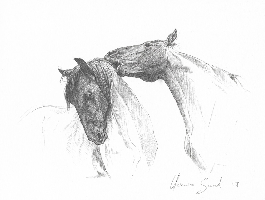 Sketch-of-two-Friesians