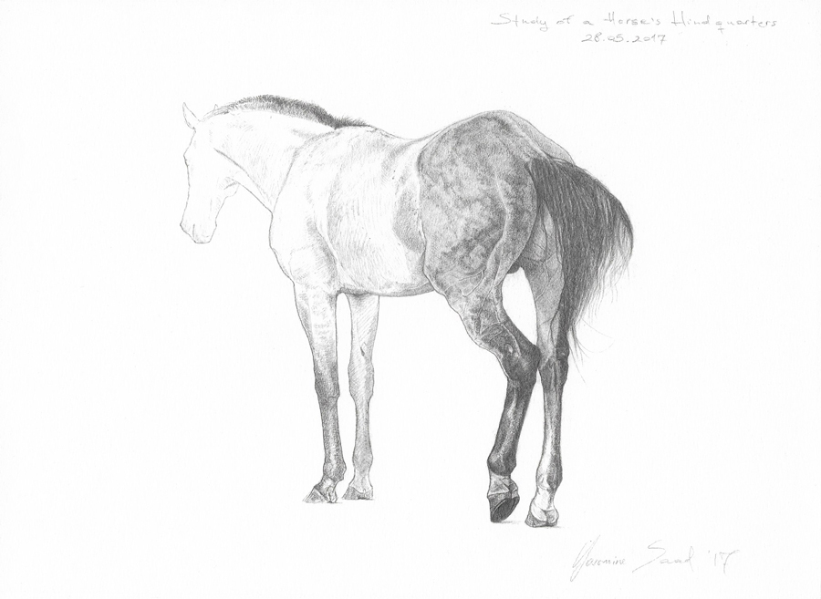 Study-of-a-horse's-hindquarters